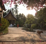 Lovely Dichotomy of Luang Prabang